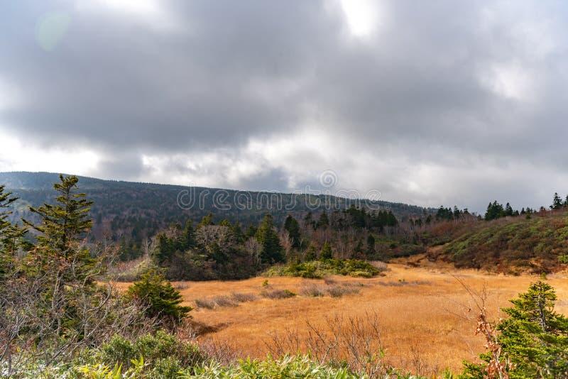 山在平衡天空下的森林风景 图库摄影
