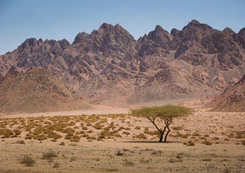山在西奈沙漠,在Sharm El谢赫附近 库存照片