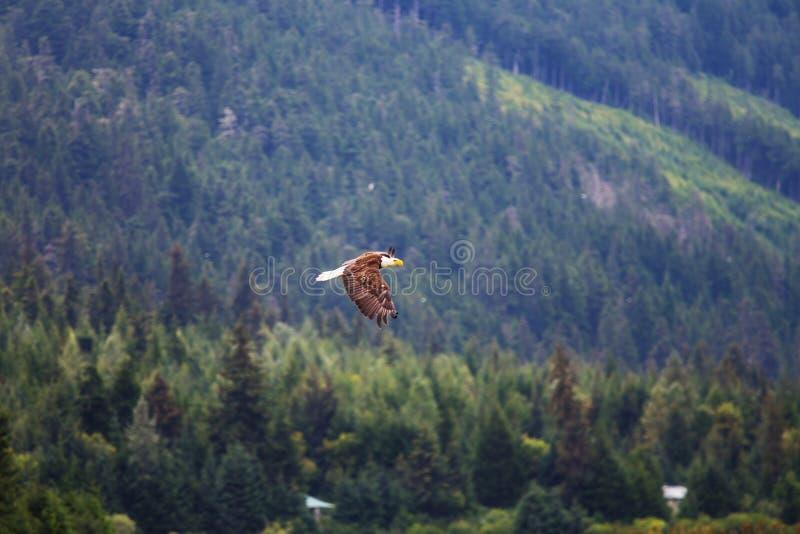 山在阿拉斯加 免版税图库摄影