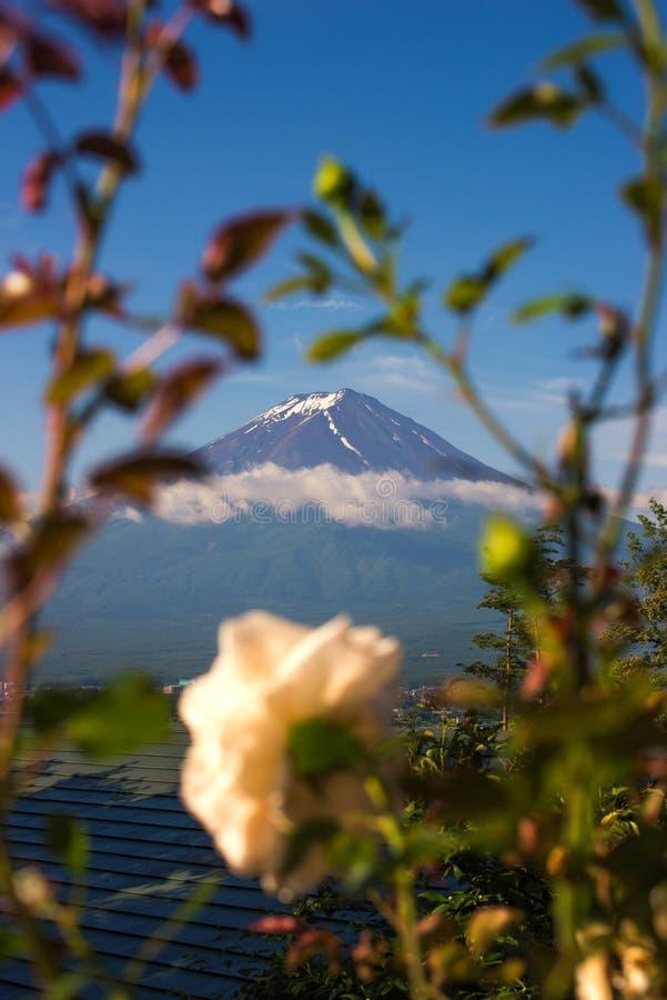 山富士与花框架的早晨 免版税库存图片