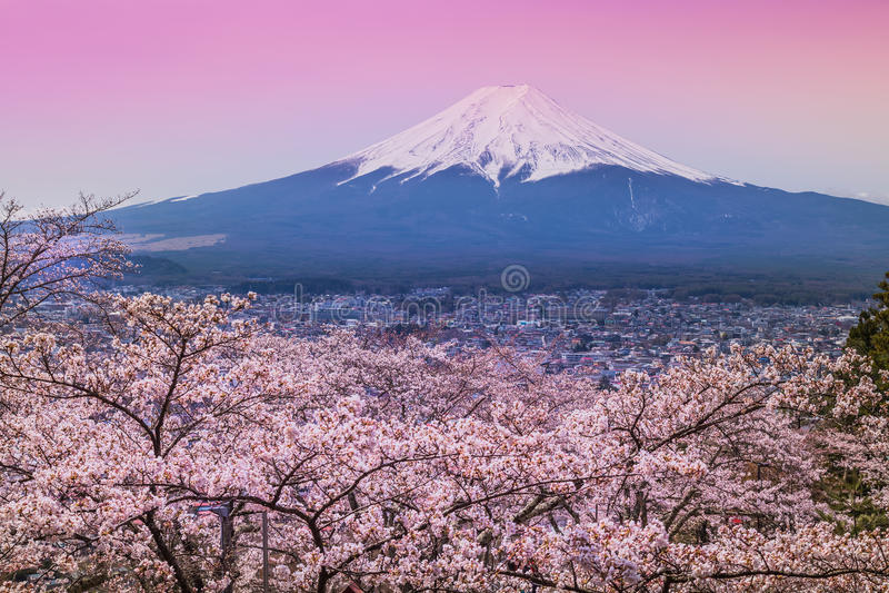 山富士在春天,樱花佐仓 库存照片
