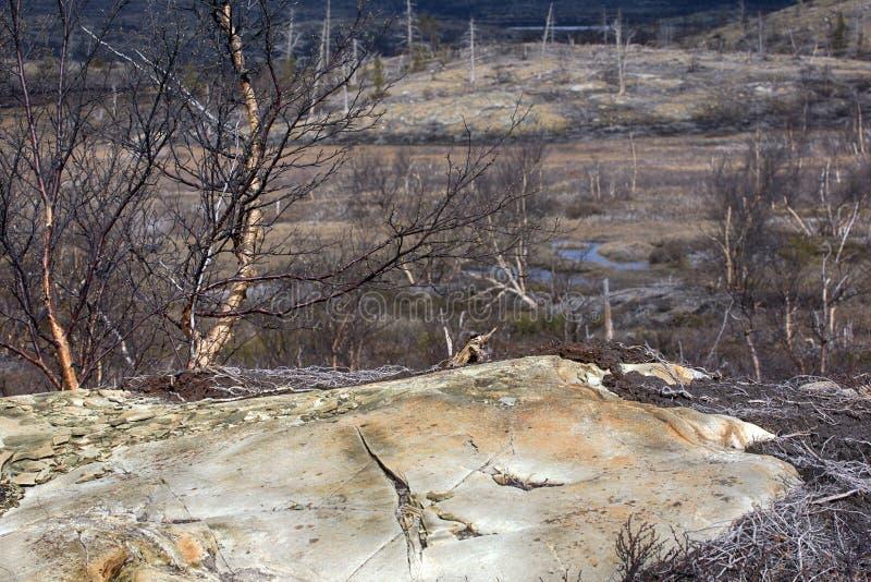 山寒带草原在早期的春天 免版税库存图片