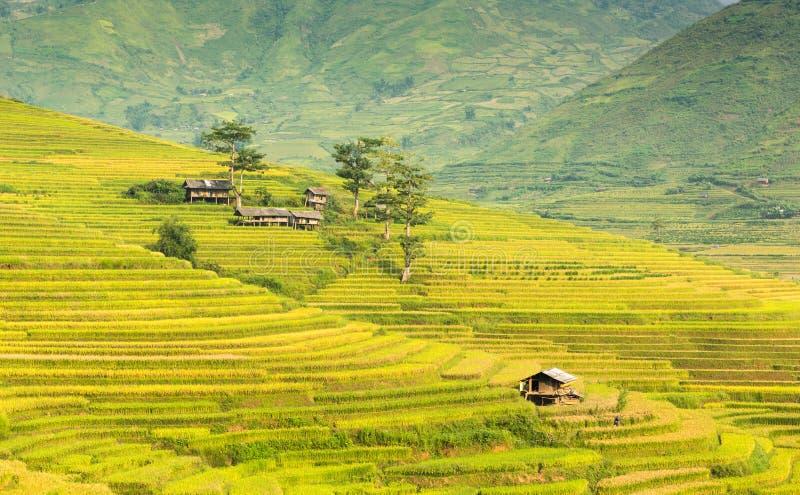山小屋和自然在越南的米大阳台环境美化 免版税库存图片