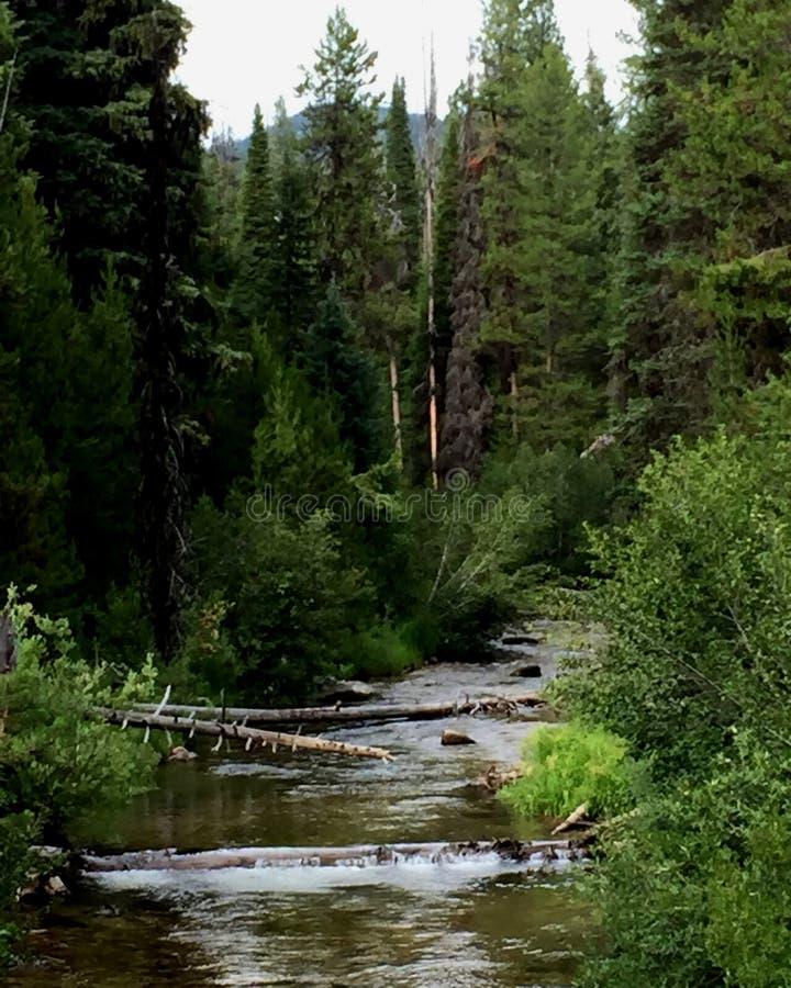 山小河在中央爱达荷 免版税图库摄影