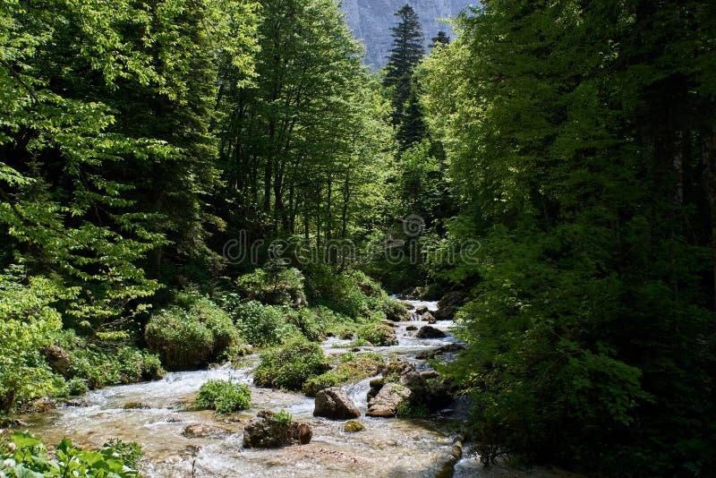 山小河在有美好的辗压的一个绿色森林里 免版税库存图片