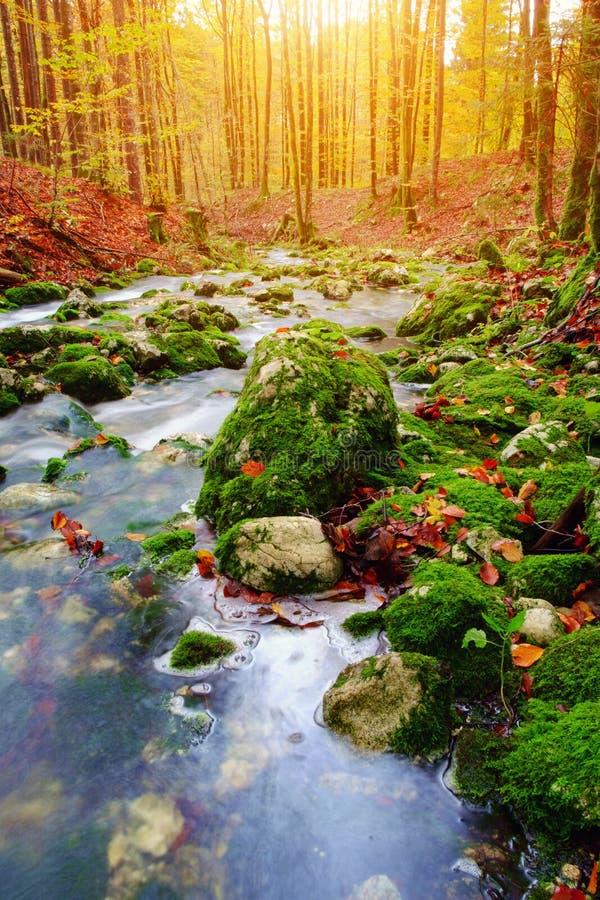 山小河在秋天森林里在特里格拉夫峰国家公园 图库摄影