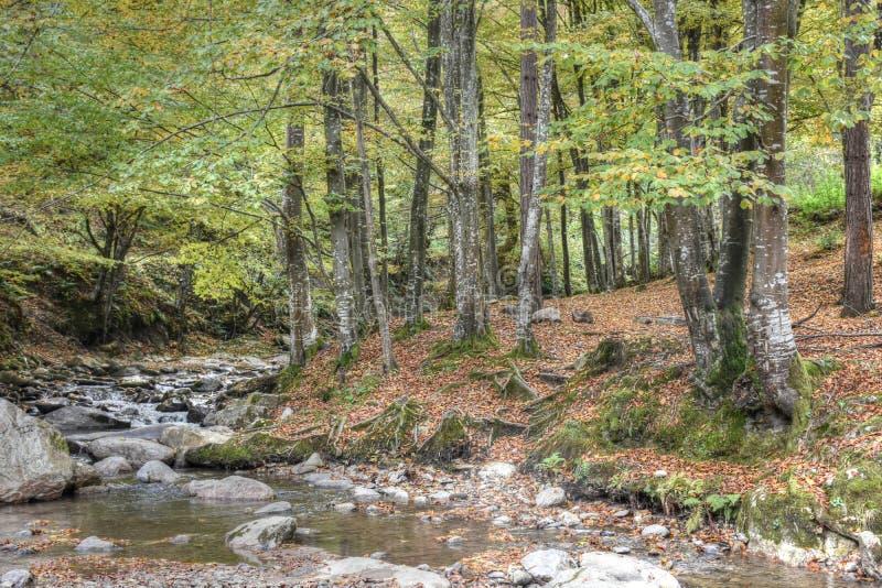 山小河通过森林 免版税图库摄影