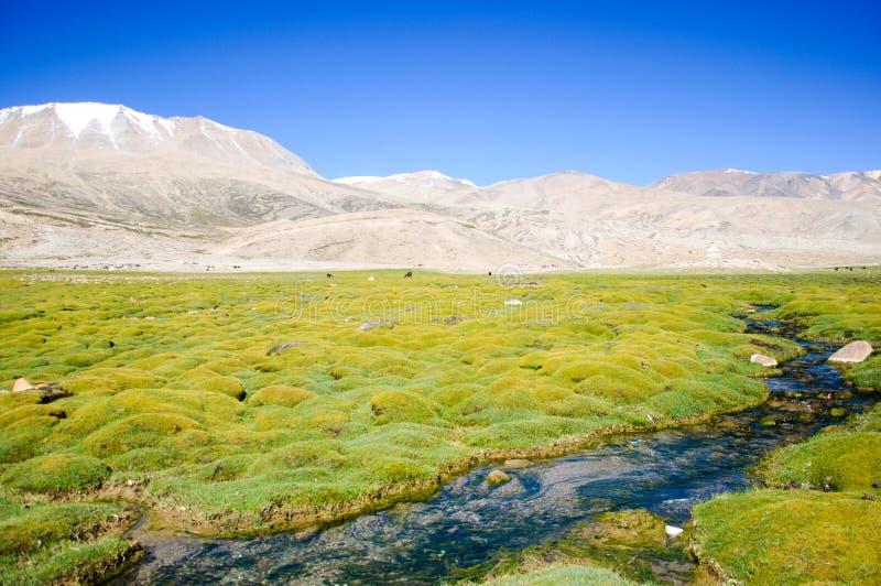 山小河,喜马拉雅山, Leh,拉达克,印度 免版税库存照片