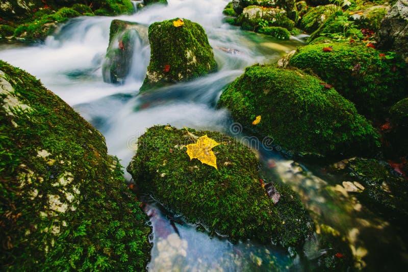 山小河细节用生苔岩石和透明的水 库存图片