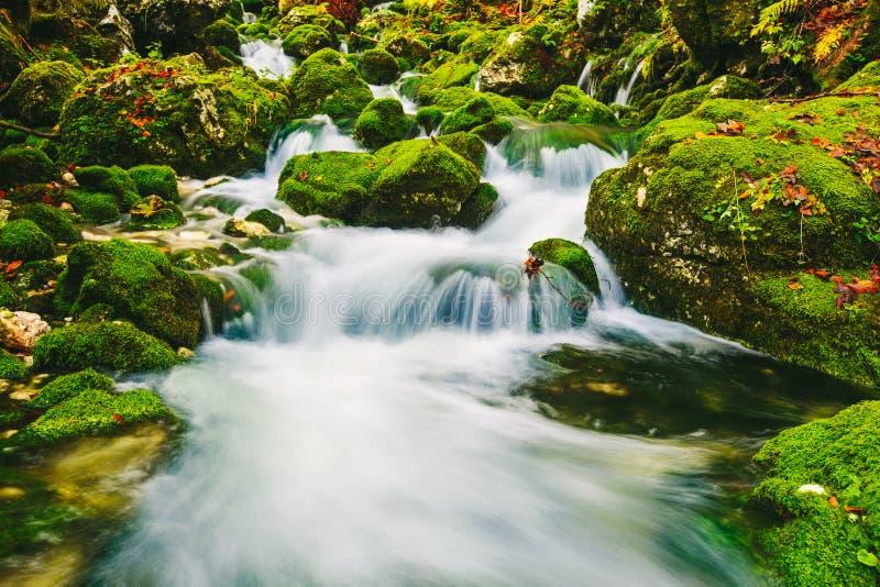 山小河细节用生苔岩石和透明的水 图库摄影