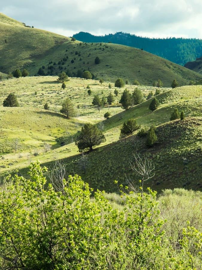 山山麓小丘在春天 免版税库存图片