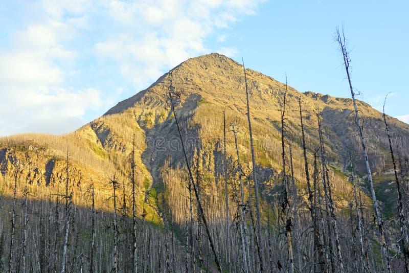 山峰在晚上阳光下 库存图片