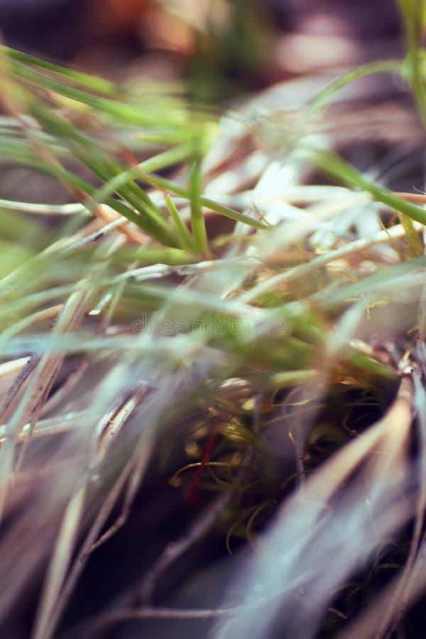 山废弃物绿色植物  免版税库存图片