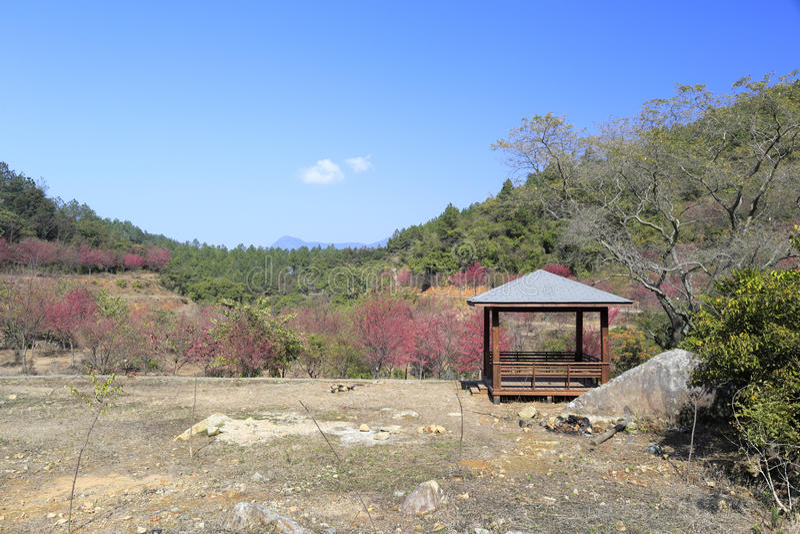 山木摊和佐仓, zaoshui村庄, amoy城市,瓷 免版税库存图片