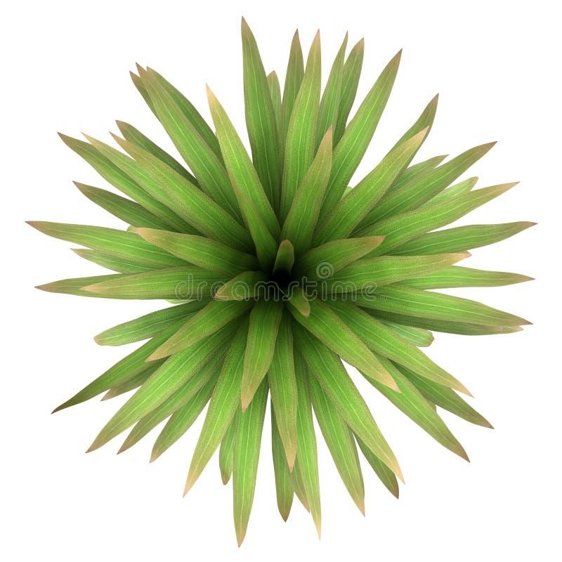 山查出的棕榈结构树顶视图  库存例证