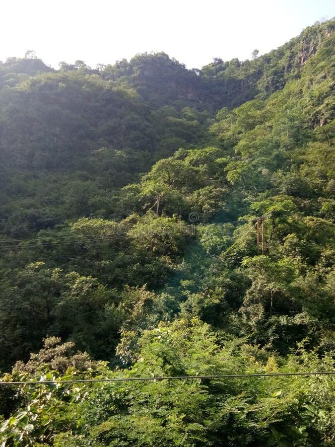 山树在克什米尔印度哈里亚纳邦 免版税库存图片
