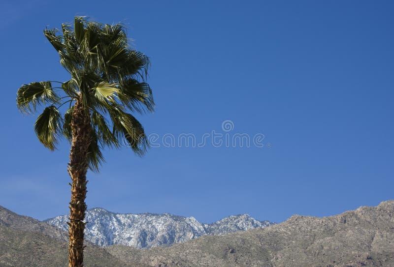 山棕榈树 图库摄影