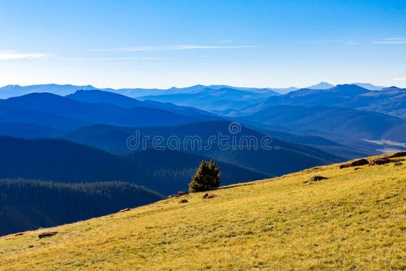 山森林原野风景在科罗拉多 图库摄影