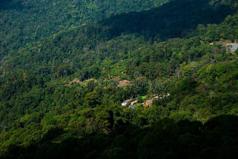 山森林狡猾的lanscape 免版税库存照片