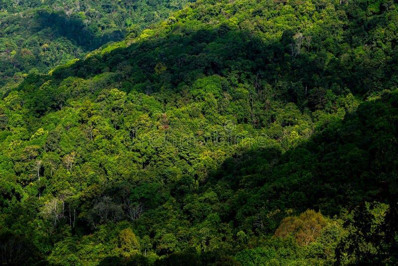 山森林狡猾的lanscape 库存图片
