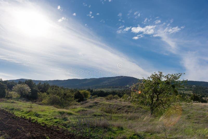 山森林风景在与云彩的晚上天空下在与开花的苹果树的阳光下 免版税库存图片