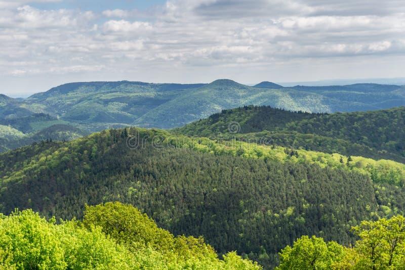 山森林风景在天空下 免版税库存图片