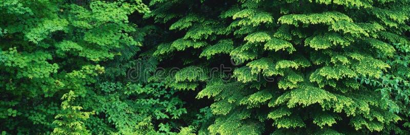 山森林 库存图片