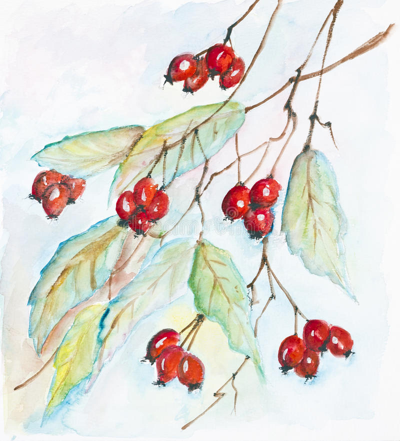 Download 山楂树的红色莓果 库存例证. 插画 包括有 油漆, 发光, 原始, 脆弱, berrying, 自治权, 部分 - 30331231