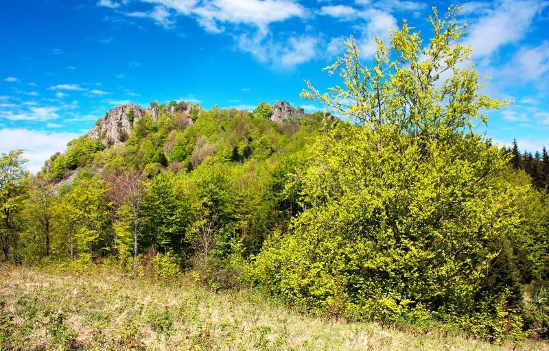 山毛榉树和木头春天视图  免版税库存照片