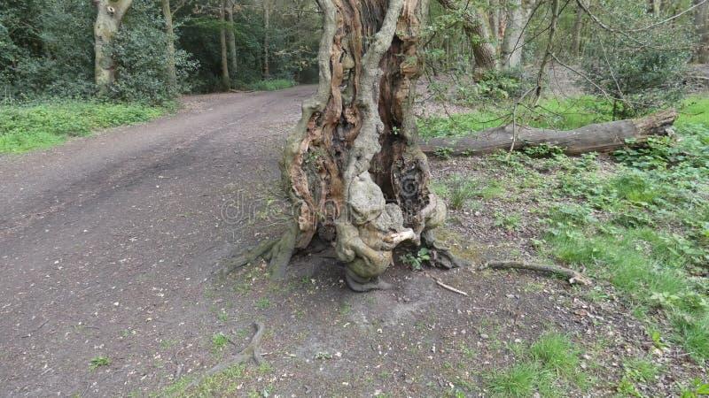 山毛榉树树精需要爱的婴孩面貌古怪的人 免版税库存照片