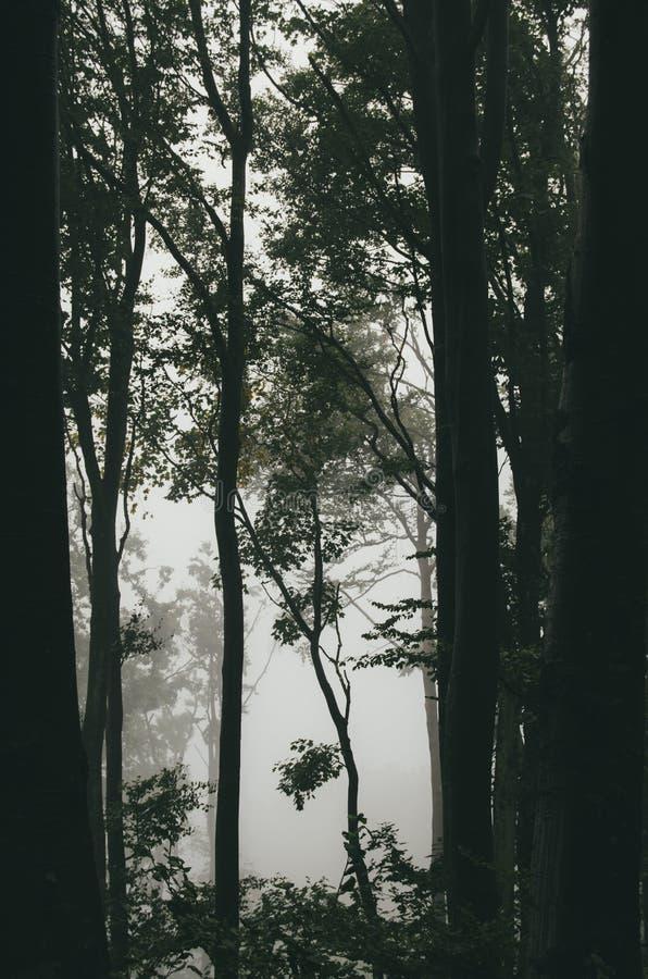 山毛榉森林细节 免版税库存图片