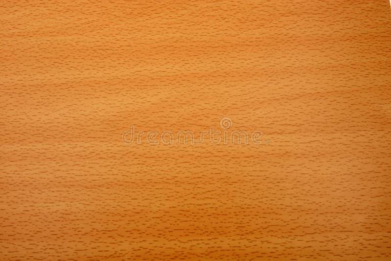 山毛榉的木材五谷纹理 库存照片