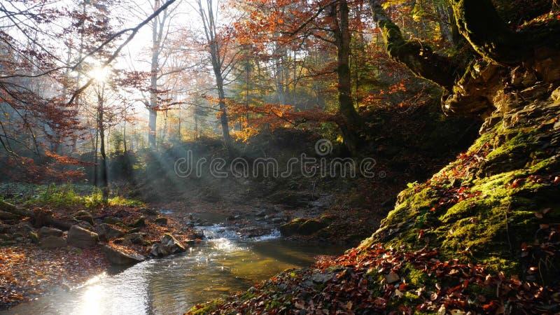 山河在秋天森林里惊人的晴天 免版税图库摄影