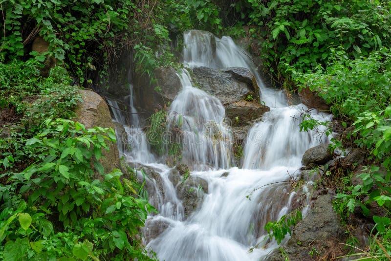 山河小河瀑布新森林/风景自然植物树有岩石和绿色mos的雨林密林在 免版税图库摄影