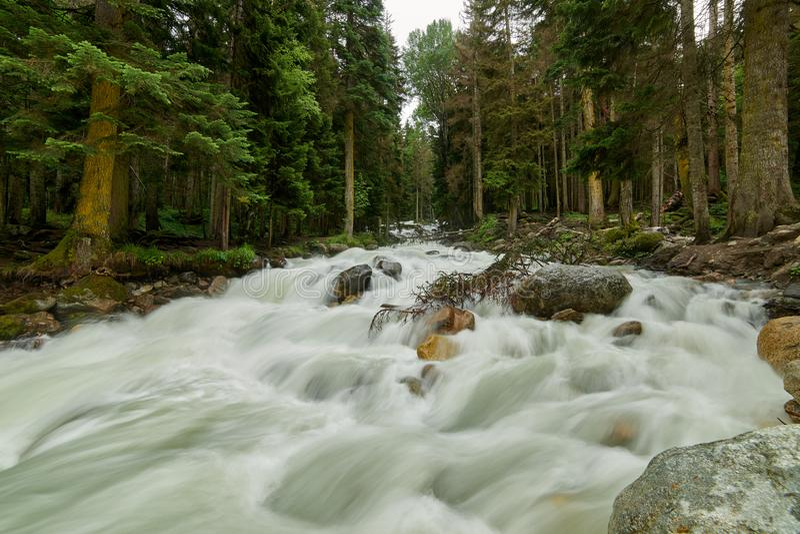 山河用快速起泡沫的水在杉木森林Ullu-Murudzhu,北高加索,卡拉恰伊-切尔克斯共和国,俄罗斯里 库存图片