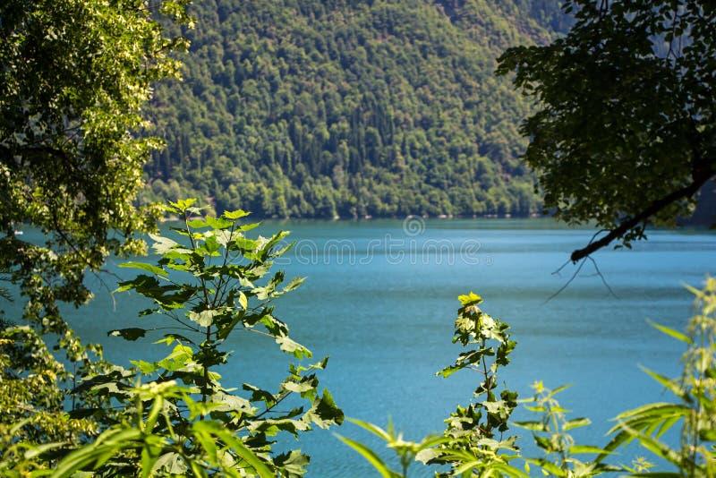 山湖照片通过树 免版税库存图片