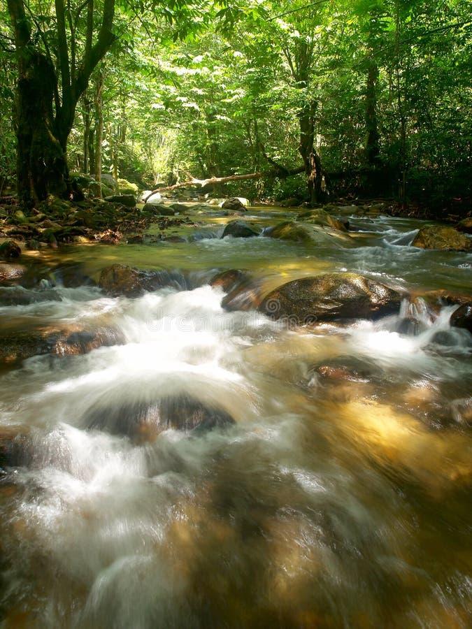 山热带瀑布 库存照片