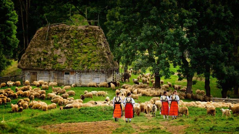 山的年轻罗马尼亚女孩与牧羊人房子和绵羊 库存图片
