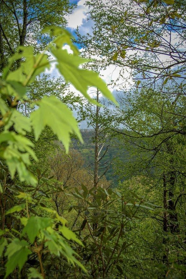 山的森林 免版税库存照片