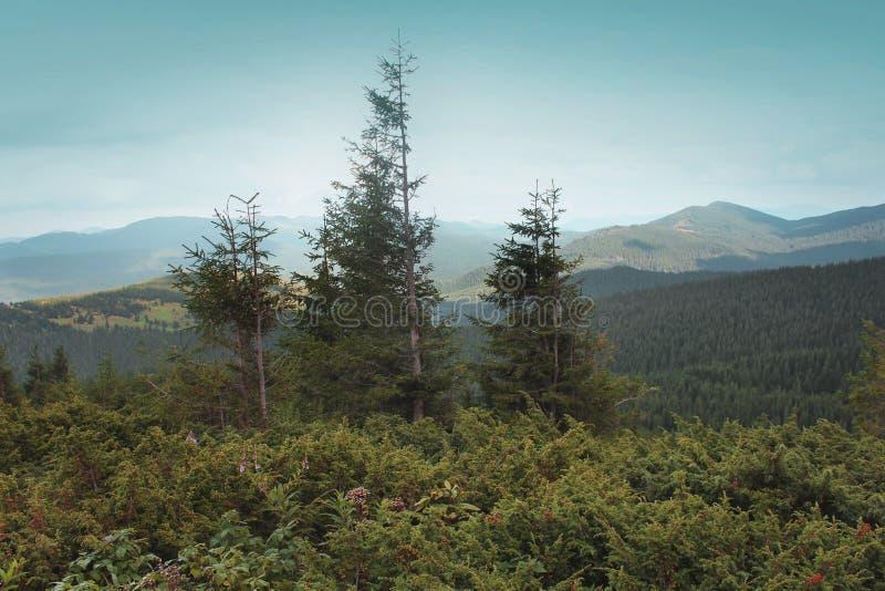 山的森林 库存照片