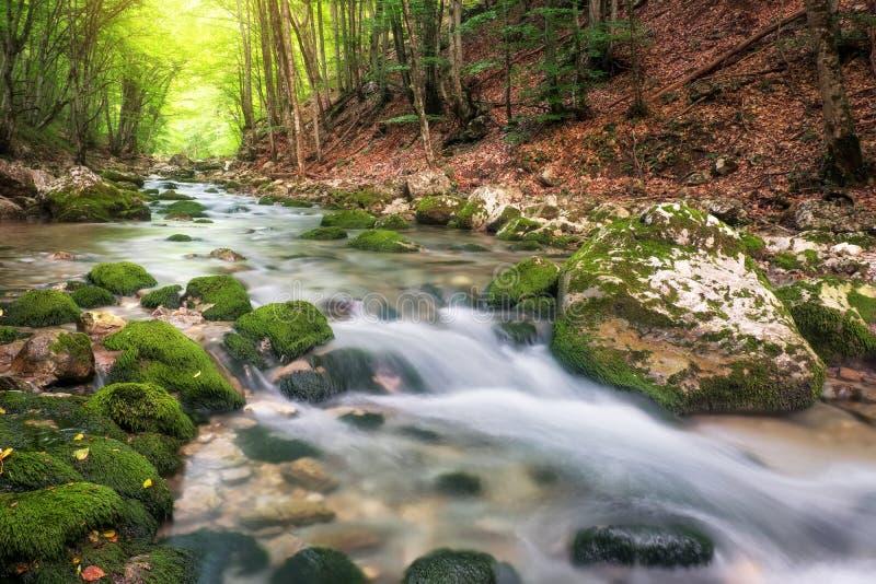 山的河在夏天 在森林的水小河 免版税库存图片