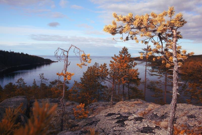 山的湖与沿岸的森林 库存图片