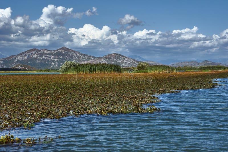 山的看法在Skadar湖的 库存照片