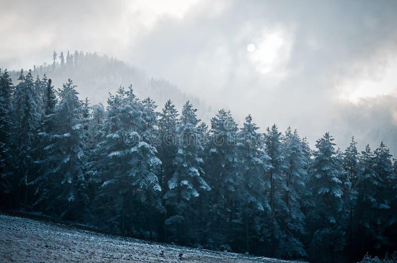 山的神秘的森林 打破的太阳 库存图片