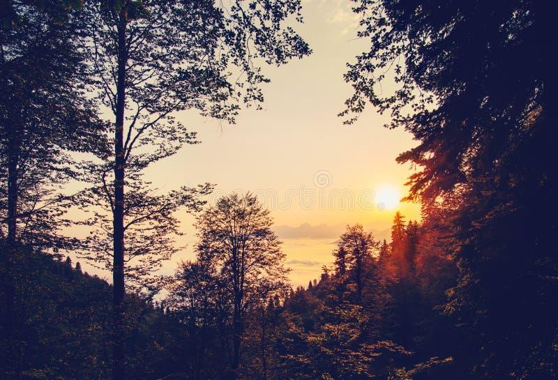山的美丽的日落风景森林在云彩 免版税库存照片