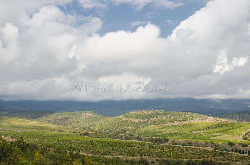 山的自然本底葡萄园 库存照片