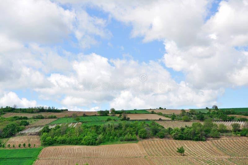 山的葡萄园 库存图片