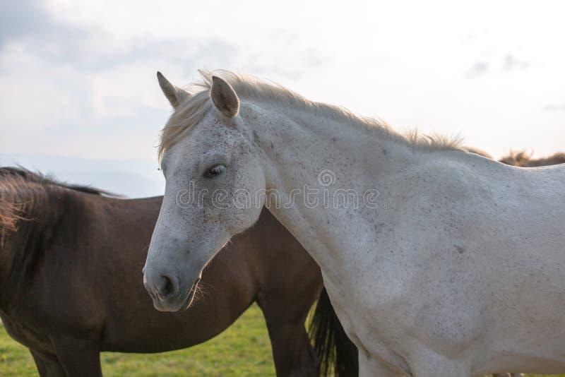 山的马牧场地 免版税库存图片