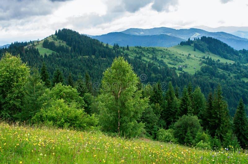 山的,倾斜草甸 免版税库存照片