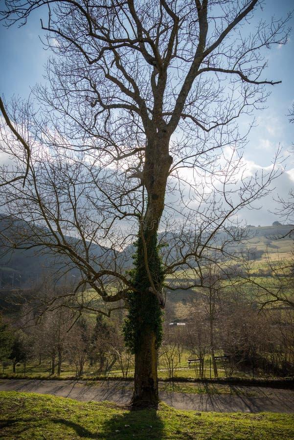 山绿色风景  图库摄影